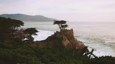Lonely Cypress - 17 Mile Drive // by Daria / epicantus & it's free to use (CC0). Click on photo to see it in full size
