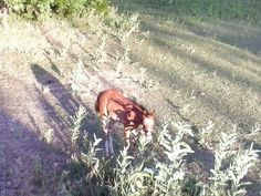 Baby horse. Springville, Ut.