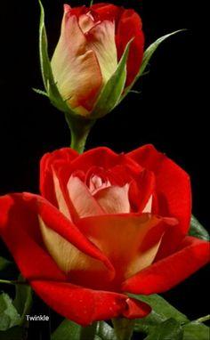 Hot milf like violet rose