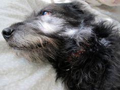 Winnie Blog - 29 Black Street: mostly fur