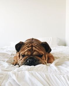 This guy is not a morning dog