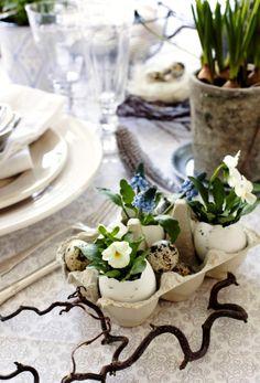 Pansies in egg shells