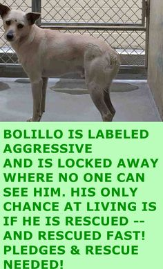 GONE --- A4819982 My name is Bolillo and I'm an approximately 3 year old male terrier. I am not yet neutered. I have been at the Downey Animal Care Center since April 18, 2015. I am available on April 18, 2015. You can visit me at my temporary home at D123. https://www.facebook.com/photo.php?fbid=863799647033702&set=pb.100002110236304.-2207520000.1430740335.&type=3&theater
