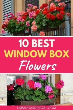 Best flower plants for window boxes - Here are 10 of the best window box flowers to beautify your home. Best flower plants for window boxes - Here are 10 of the best window box flowers to beautify your home. Window Box Plants, Window Box Flowers, Window Planter Boxes, Hanging Window Boxes, Diy Flower Boxes, Shade Flowers, Planter Ideas, Geranium Plant, Geranium Flower