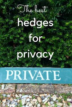 How to choose and grow hedges for privacy in middlesized gardens. How high should it be? Can your neighbour complain that your hedge is too high?