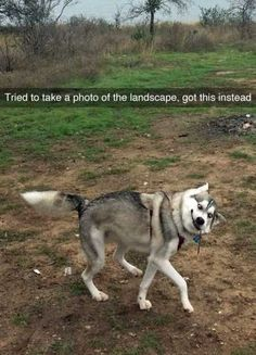 36 New Funny Animal Pictures You're Going To Love
