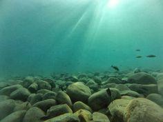 Fieldnotes: Underwater in Lake Tanganyika