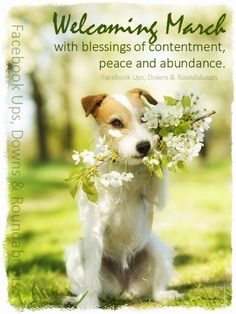 Welcoming March with blessings of contentment, peace and abundance.  https://www.facebook.com/UpsDownsRoundabouts/photos/p.924167524284655/924167524284655/?type=1&theater