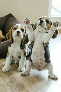 Cute puppies that my LORD created!