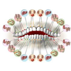 Simple graphic to show how teeth are connected to different organs of a body. - Dhara Kothari - Google+