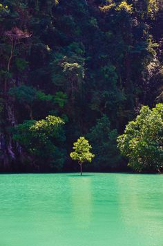 Beautiful green water!