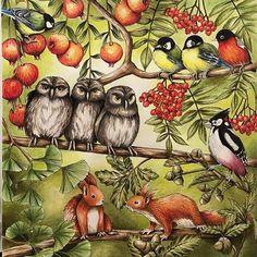 #owls #menuetdebonheur #prismacolor #adultocoloring #coloringforadults #squirrel