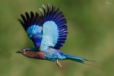 Image result for birds photographs