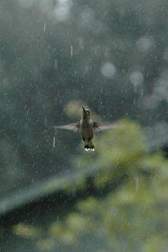 hummingbird by Eva0707