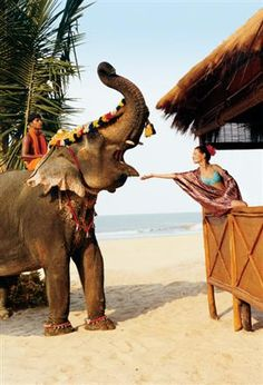 Honeymoon couple Package India :  India?