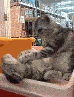 Cat Giving A Cat A Long Neck Rub