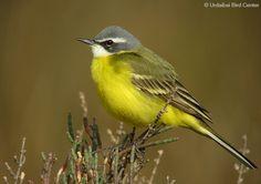 Aves - Urdaibai Bird Center