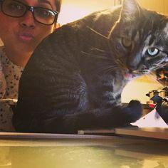 Estudiar estudio poco con gatos que sacan la lengua para las fotos mientras se sientan en mis apuntes  #cat #cats #TagsForLikes #catsagram #catstagram #instagood #kitten #kitty #kittens #pet #pets #animal #animals #petstagram #petsagram #photooftheday #catsofinstagram #ilovemycat #instagramcats #nature #catoftheday #lovecats #furry #sleeping #lovekittens #adorable #catlover #instacat by natyfeos