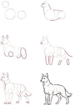 🌸~Credits to the artist, amazing wolf drawing tutorial~🌸 Drawing Techniques, Drawing Tips, Drawing Reference, Drawing Sketches, Painting & Drawing, Drawing Ideas, Dog Drawing Tutorial, Drawing Drawing, Wolf Drawing Easy