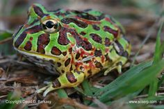 pictures of frogs and toads | Frog and Toad Photo Gallery