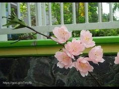 Cherry Blossom with crepe paper - Craft Tutorial - YouTube
