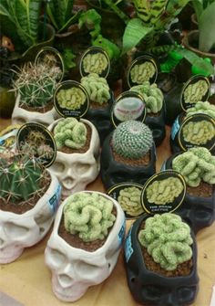 Skull pots holding brain-shaped cacti why don't want one of these? Oh cause it's a fucking skull!!!!