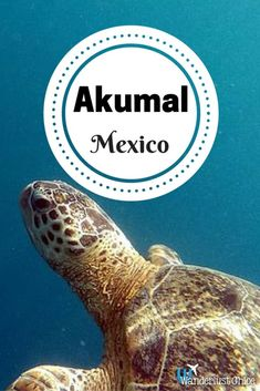 Akumal, Mexico. Akumal, Mexico is home to a beautiful beach and an incredible place to snorkel with turtles.