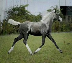 Foal with nice stride