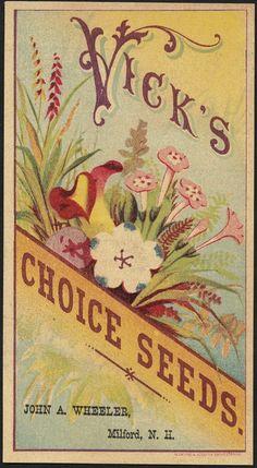 Vick's choice seeds.