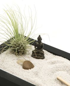 Meditation Zen garden with living air plant and serene Buddha statue. Made in the USA, available at BuddhaGroove.com.
