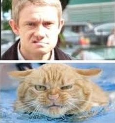Martin Freeman is made of kittens. Angry kittens. Jam doesn't even enter into it.