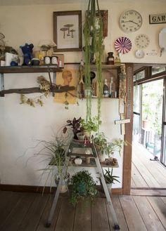 ホヤを上から垂らし、植物と相性がよいという「アスティエ・ド・ヴィラット」の皿などとコーディネート。脚立はこの家にもともと置いてあったものを使用した。