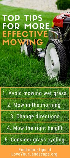 Simple tips from the pros for a healthy, green lush lawn