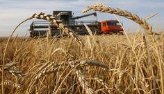 Safra de grãos pode crescer 2,1% em 2016, diz Conab - http://po.st/z1QqC8  #Destaques - #Conab, #Produção, #Safra