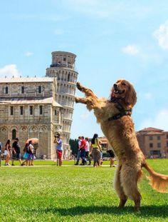 犬も支える斜塔  どっかの紋章みたい