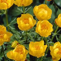 Tarhakullero Etna - Viherpeukalot Spring Has Sprung, Different Colors, Tulips, Rose, Flowers, Plants, Spikes, Gardens, Cnd Nails