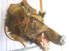 Wild Boar Head // Very Large Wild Boars by VintageRetroOddities