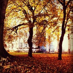 Near the Main Building during #fall
