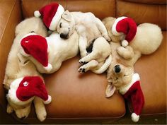 Christmas Golden Retriever Puppy Holiday Dogs Puppies Dogs