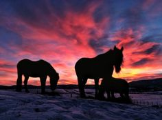 Sunrise in the Bitterroot Valley. Winter's clouds help create a dramatic backdrop for horses grazing in a snowy field near Stevensville, Mont. in a photo by Perry Backus of the Ravalli Republic.