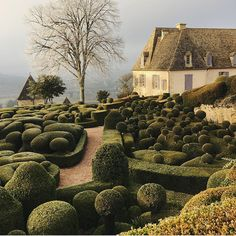 Topiary Tuesday 💚 Chateau de Marqueyssac in the Dordogne which we've borrowed from our friend Landscape Design, Garden Design, Topiary Garden, Boxwood Topiary, Dordogne, Shade Garden, Garden Plants, Hedges, Restaurant Design