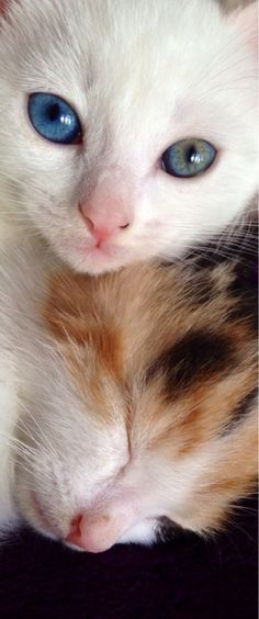 Two of my beautiful kittens