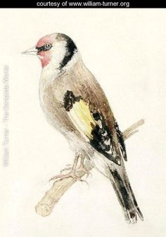 Goldfinch, from The Farnley Book of Birds, c.1816 - Joseph Mallord William Turner - www.william-turner.org
