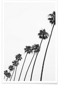 Cali Palms als Premium Poster von Shot by Clint | JUNIQE (Diy Art Photo)