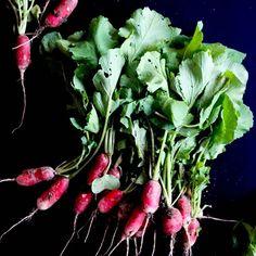 Zebrałam dziś od siebie z ogródka wielkie pęczki rzodkiewek 🌱 Uwielbiam rzodkiewki! 🌱 Świeży chleb, twarożek, szczypiorek i #rzodkiewka 🌱 Nic więcej nie potrzeba! A Wy a jakim wydaniu lubicie najbardziej? 🌻🌼 . #rzodkiewki #rzodkiewka🌱 #radish #radishes #pickledradish  #radishesarerad #instaradish #radishpickle #vegetabletannedleather Stuffed Peppers, Vegetables, Food, Meal, Stuffed Pepper, Veggies, Essen, Vegetable Recipes, Stuffed Sweet Peppers
