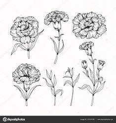 Most Popular ideas white carnation flower tattoo Carnation Drawing, Carnation Flower Tattoo, Birth Flower Tattoos, Small Flower Tattoos, Flower Tattoo Designs, Small Tattoos, Black And White Flower Tattoo, Tattoo Drawings, Body Art Tattoos