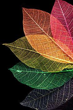 Leaves #rainbow #colors