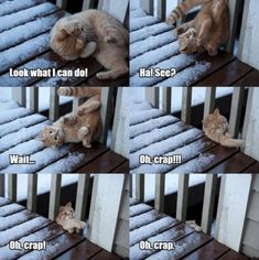 Funny Cat Memes 861735709929416516 - How are you celebrating Caturday? We're doing nothing and loving every moment of it. memes # cats # funny cats # funny cat memes # caturday # caturday memes # animal memes Source by humourninja Cute Animal Memes, Funny Animal Quotes, Animal Jokes, Funny Animal Pictures, Cute Funny Animals, Cute Baby Animals, Animal Fun, Cat Quotes, Animal Pics