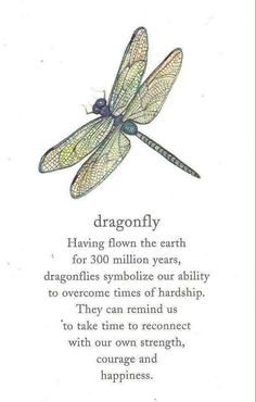 Dragonfly lore...