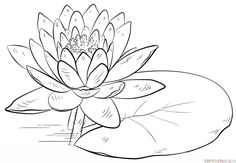 How to draw a water lily and pad step by step. Drawing tutorials for kids and beginners.